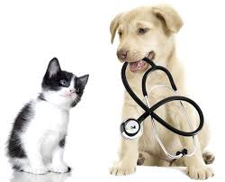 Veterinary Practice Valuation
